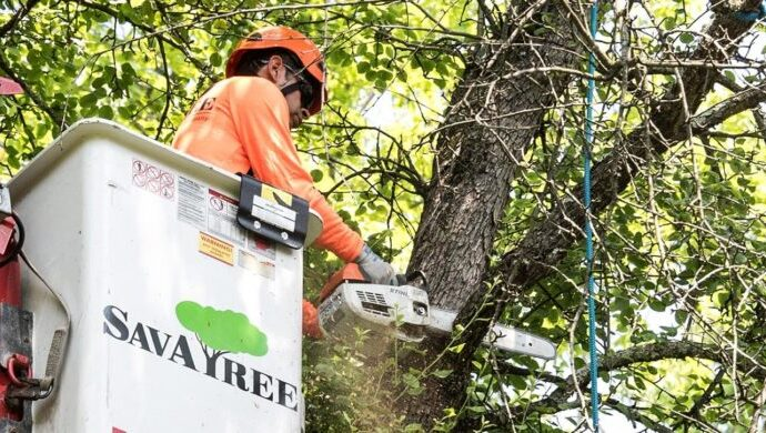 Arborist-Consultations-Amarillo Tree Trimming and Stump Grinding Services-We Offer Tree Trimming Services, Tree Removal, Tree Pruning, Tree Cutting, Residential and Commercial Tree Trimming Services, Storm Damage, Emergency Tree Removal, Land Clearing, Tree Companies, Tree Care Service, Stump Grinding, and we're the Best Tree Trimming Company Near You Guaranteed!