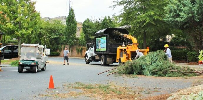 Commercial-Tree-Services-Amarillo Tree Trimming and Stump Grinding Services-We Offer Tree Trimming Services, Tree Removal, Tree Pruning, Tree Cutting, Residential and Commercial Tree Trimming Services, Storm Damage, Emergency Tree Removal, Land Clearing, Tree Companies, Tree Care Service, Stump Grinding, and we're the Best Tree Trimming Company Near You Guaranteed!