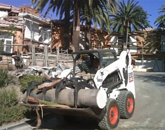 Palm Tree Trimming and Removal-Amarillo Tree Trimming and Stump Grinding Services-We Offer Tree Trimming Services, Tree Removal, Tree Pruning, Tree Cutting, Residential and Commercial Tree Trimming Services, Storm Damage, Emergency Tree Removal, Land Clearing, Tree Companies, Tree Care Service, Stump Grinding, and we're the Best Tree Trimming Company Near You Guaranteed!