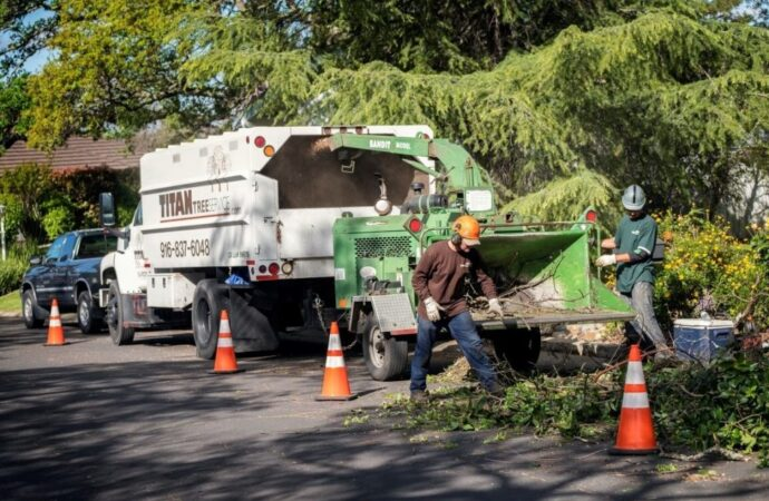 Residential-Tree-Services-Amarillo Tree Trimming and Stump Grinding Services-We Offer Tree Trimming Services, Tree Removal, Tree Pruning, Tree Cutting, Residential and Commercial Tree Trimming Services, Storm Damage, Emergency Tree Removal, Land Clearing, Tree Companies, Tree Care Service, Stump Grinding, and we're the Best Tree Trimming Company Near You Guaranteed!