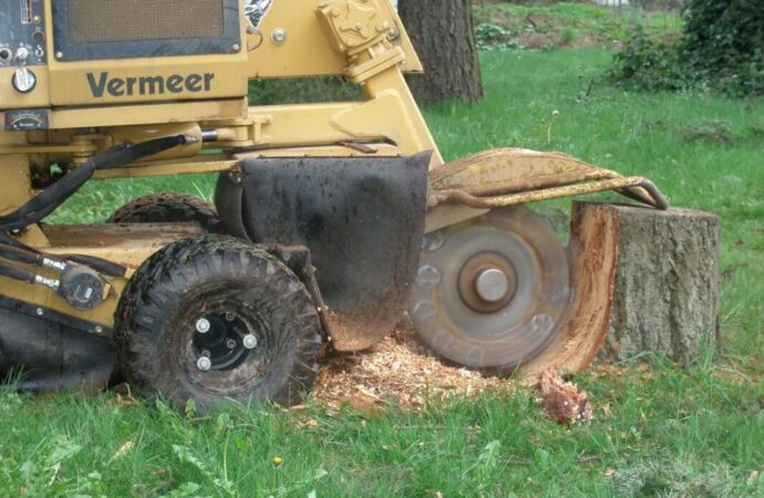Stump-Grinding-Amarillo Tree Trimming and Stump Grinding Services-We Offer Tree Trimming Services, Tree Removal, Tree Pruning, Tree Cutting, Residential and Commercial Tree Trimming Services, Storm Damage, Emergency Tree Removal, Land Clearing, Tree Companies, Tree Care Service, Stump Grinding, and we're the Best Tree Trimming Company Near You Guaranteed!