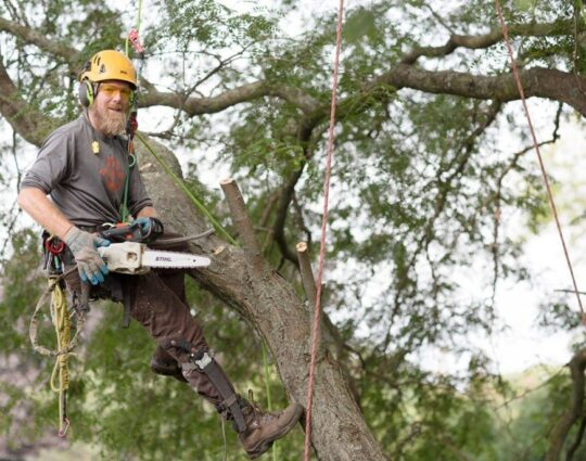 Tree-Cutting-Amarillo Tree Trimming and Stump Grinding Services-We Offer Tree Trimming Services, Tree Removal, Tree Pruning, Tree Cutting, Residential and Commercial Tree Trimming Services, Storm Damage, Emergency Tree Removal, Land Clearing, Tree Companies, Tree Care Service, Stump Grinding, and we're the Best Tree Trimming Company Near You Guaranteed!