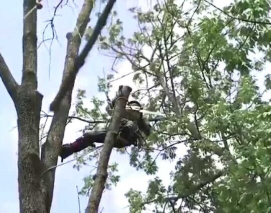 Tree-Removal-Amarillo Tree Trimming and Stump Grinding Services-We Offer Tree Trimming Services, Tree Removal, Tree Pruning, Tree Cutting, Residential and Commercial Tree Trimming Services, Storm Damage, Emergency Tree Removal, Land Clearing, Tree Companies, Tree Care Service, Stump Grinding, and we're the Best Tree Trimming Company Near You Guaranteed!