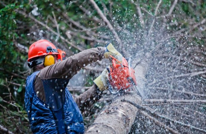 Bishop Hills-Amarillo Tree Trimming and Stump Grinding Services-We Offer Tree Trimming Services, Tree Removal, Tree Pruning, Tree Cutting, Residential and Commercial Tree Trimming Services, Storm Damage, Emergency Tree Removal, Land Clearing, Tree Companies, Tree Care Service, Stump Grinding, and we're the Best Tree Trimming Company Near You Guaranteed!