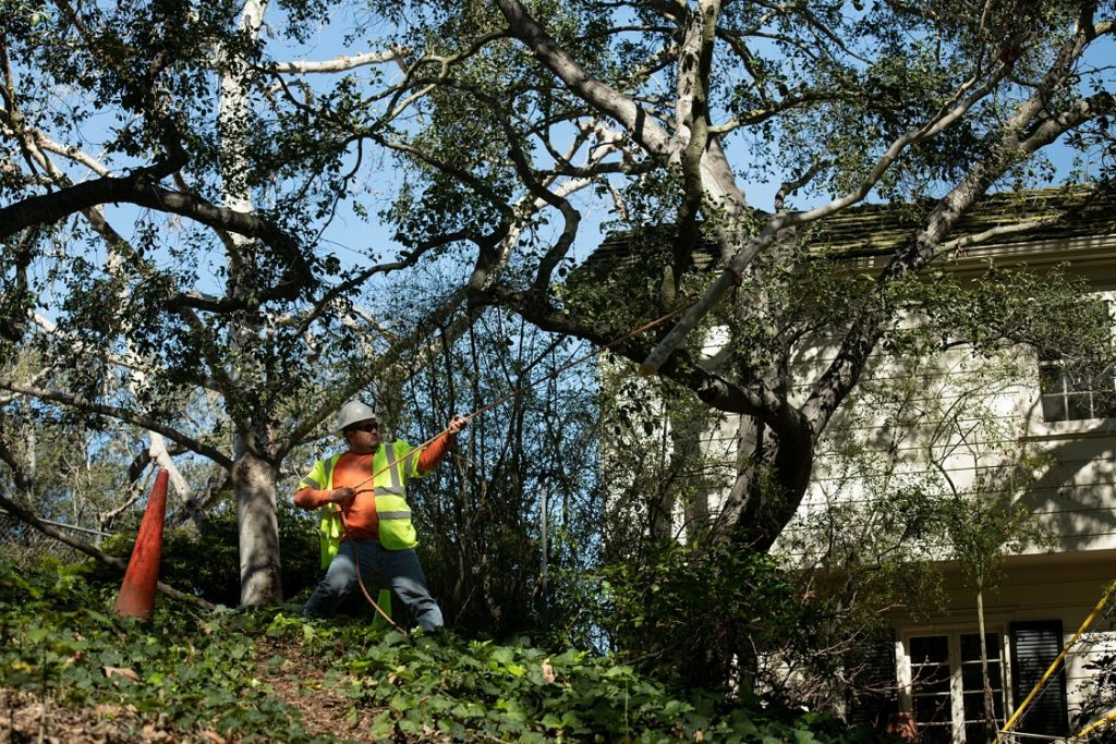 Canyon-Amarillo Tree Trimming and Stump Grinding Services-We Offer Tree Trimming Services, Tree Removal, Tree Pruning, Tree Cutting, Residential and Commercial Tree Trimming Services, Storm Damage, Emergency Tree Removal, Land Clearing, Tree Companies, Tree Care Service, Stump Grinding, and we're the Best Tree Trimming Company Near You Guaranteed!